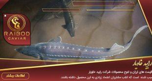 پخش کننده انواع ماهی خاویار