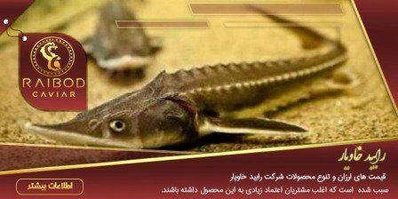 ماهی خاویار در قم