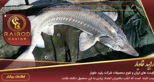 قیمت ارزان ماهی خاویار