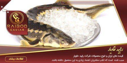 عرضه کننده ماهی خاویار زنده