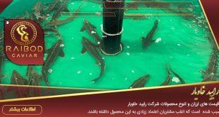 لیست قیمت ارزان ماهی خاویار