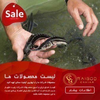 خرید و فروش بچه ماهی خاویار در اصفهان