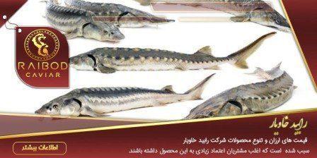 آخرین قیمت ماهی خاویار درجه یک