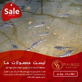 شرایط پرورش ماهی خاویار در ایران