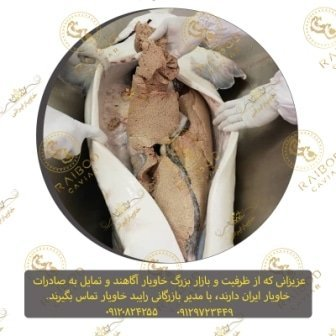 قیمت خرید مرغوبترین خاویار الماس ایرانی