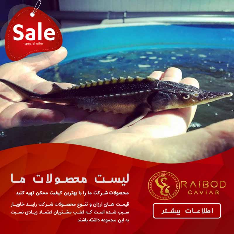 خرید و فروش بچه ماهی خاویاری