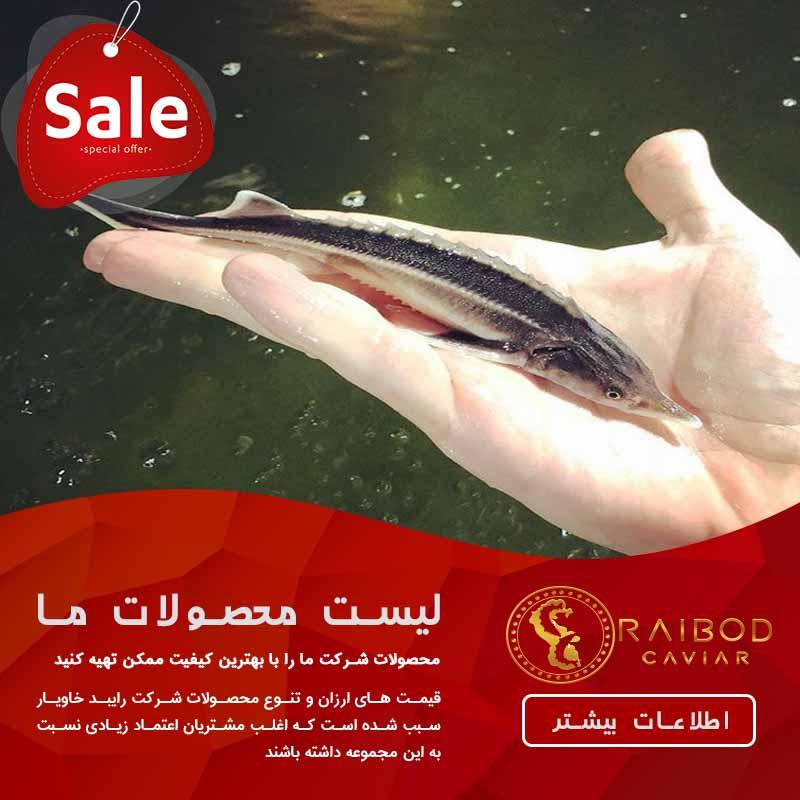 فروش بچه ماهی خاویاری در کشور