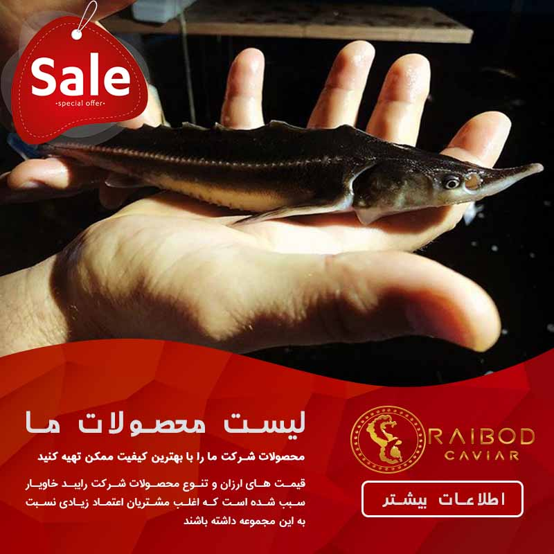 خرید اینترنتی و فروش بچه ماهی خاویاری