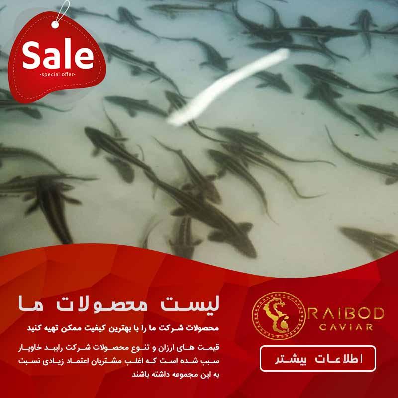 مرکز تولید ماهی خاویار