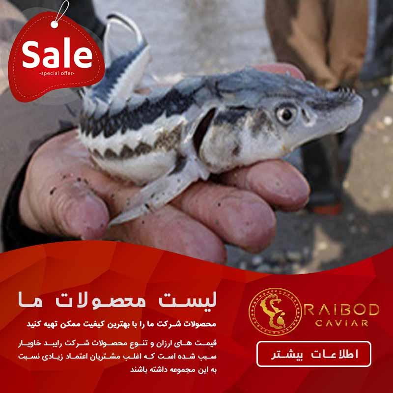 ارائه دهنده مستقیم انواع بچه ماهی خاویاری