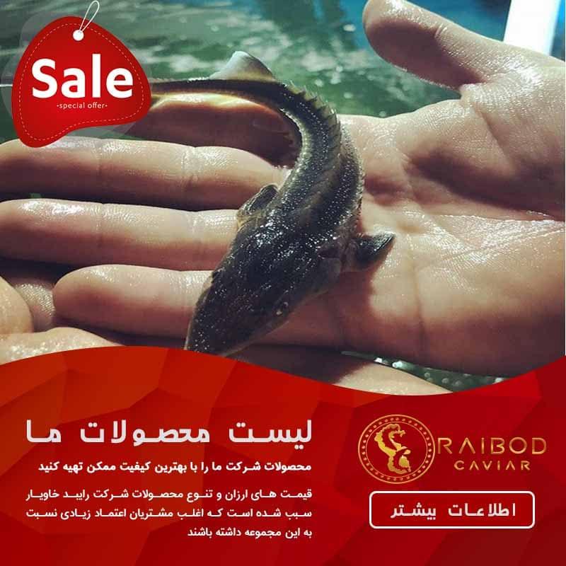 قطب فروش بچه ماهی در ایران