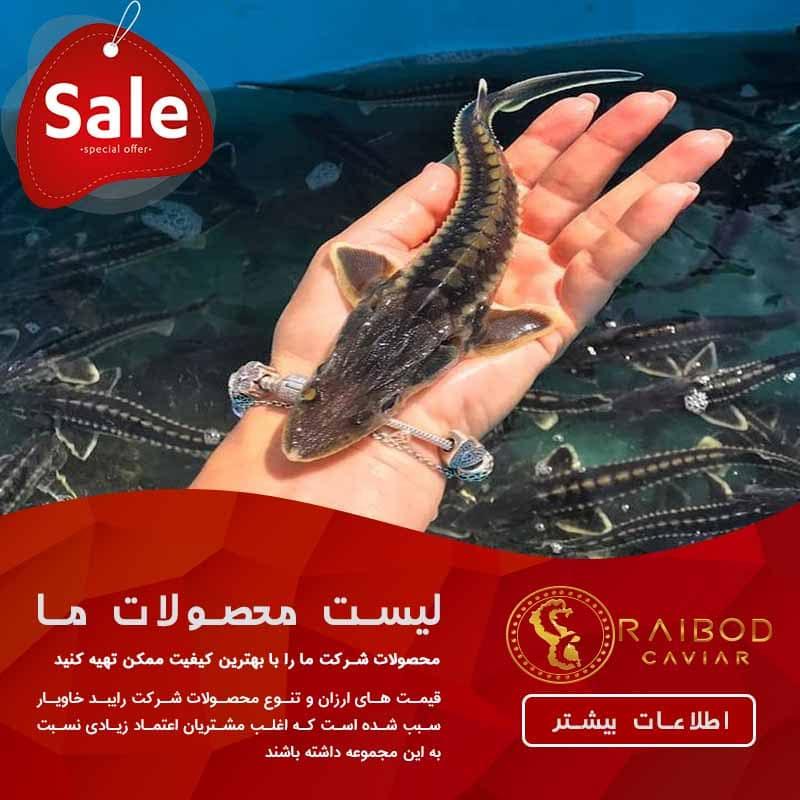 قیمت مرغوب ترین بچه ماهی
