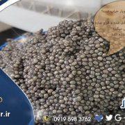 بهترین صادرکننده خاویار در ایران